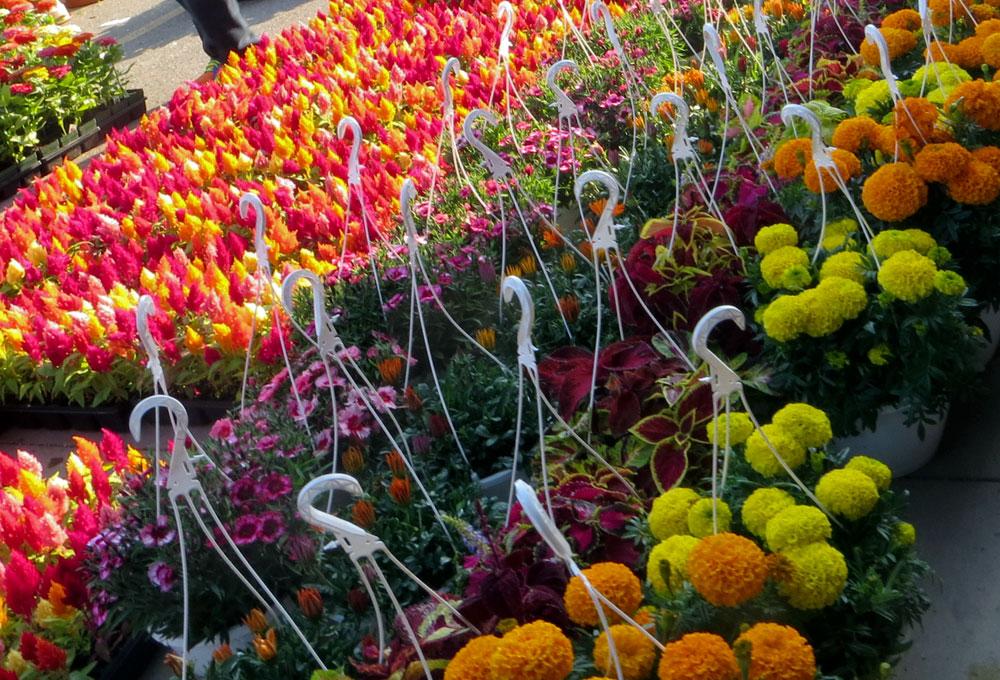 eastern market flowers and hanging baskets. Black Bedroom Furniture Sets. Home Design Ideas